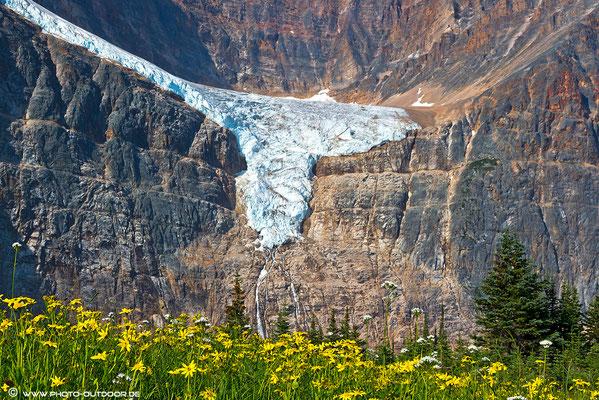 Blumenwiese unter dem Angel Glacier.