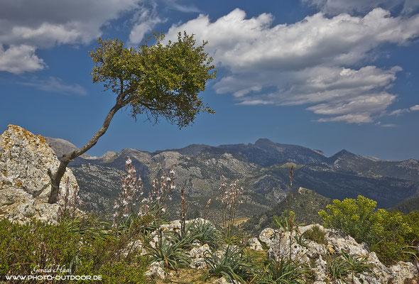 Ausblick auf die Bergwelt Mallorcas.