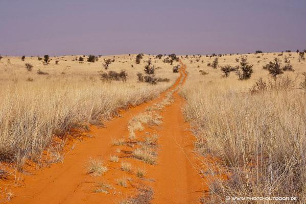 Der Weg nach Gharagab (Kgalagadi-NP)
