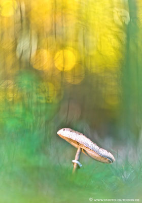 Isst man die falschen Pilze, verschwimmt der Blick manchmal ein bißchen...