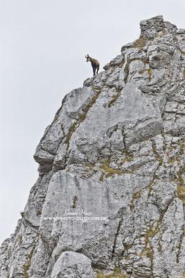 Gipfelstürmer im Karwendel.