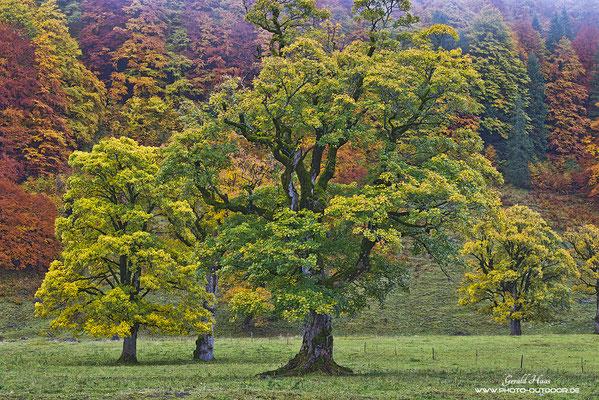 Symphonie der Herbstfarben