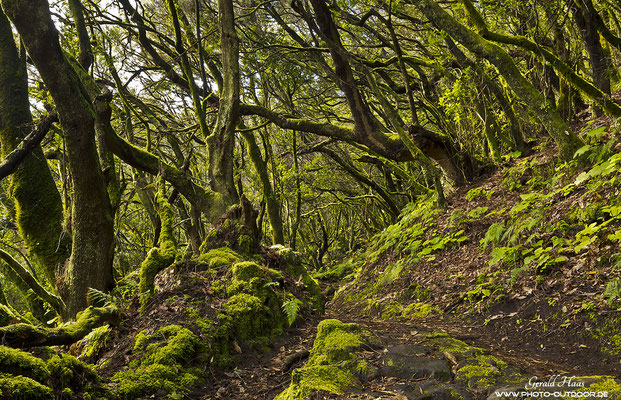 Unterwegs im Urwald von El Pilar