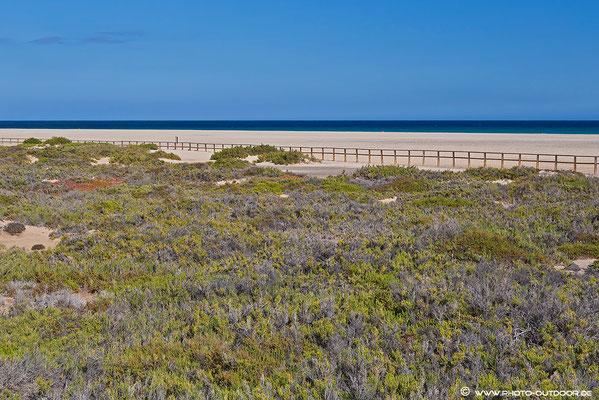 Die Salzwiesen am Playa del Matorral - Lebensraum vieler Tiere!