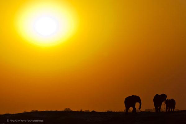 Sonnenuntergangsstimmung am Chobe