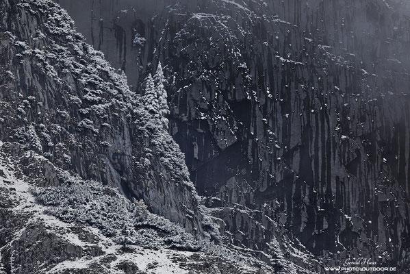 Für kurze Zeit lichtet sich der Nebel und gibt den Blick auf die verschneiten Bäume in der Steilwand frei.