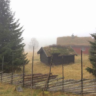 典型的なノルウェーのおうち。屋根にくさたくさん