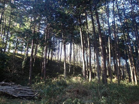 針葉樹からの木漏れ日が落ち着く