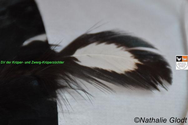 korrekte Brustdobbelung einer schwarz-weißgedobbelten Henne