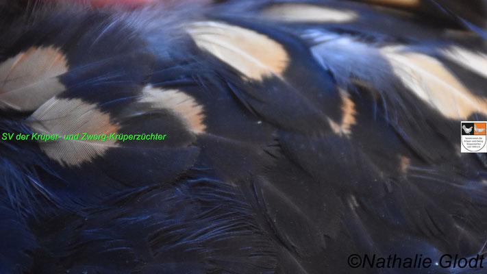 korrekte Brustdobbelung einer schwarz-gelbgedobbelten Henne