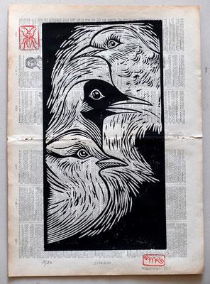 Gravure sur bois - bois gravé : Oiseaux  40x30-Papier encyclopedie 1901 - 110€