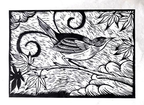 Gravure sur bois - bois gravé : Oiseau lyre 45x60-Papier blanc vinci -230€