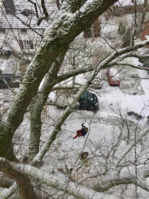 Baumarbeiten bei Schnee