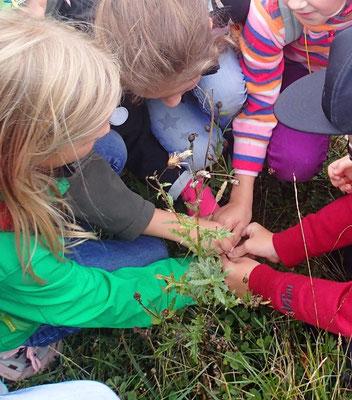 Wildnisschule-Naturerlebnis für Grundschüler /  www.wildnisgeist.de