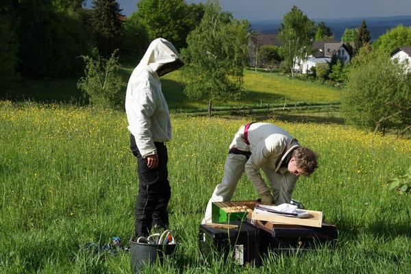 Vorbereitung der Behausung (Beute) für den Schwarm (Foto: T. Grimm)