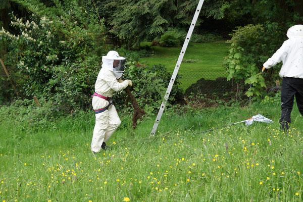 Bienenschwarm in den Händen Foto: (T. Grimm)
