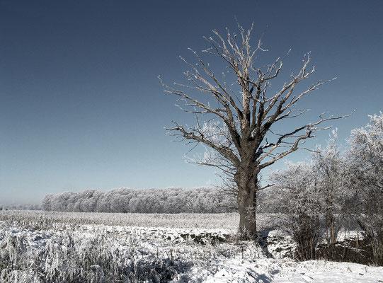 Toter Baum  bei Nottebrock  115x85 cm