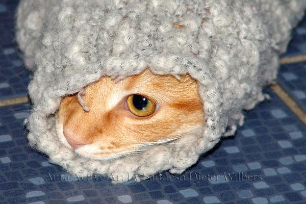 """Chandro: """"Ob Ärmel von Wolljacken die besseren Schlafsäcke sind?""""  35x35 cm"""