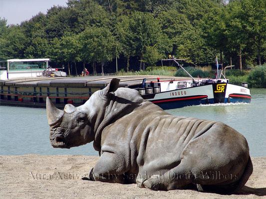Was Nashorn träumt - 14  80x60 cm