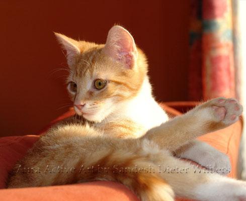 Der junge Raja Chandro  55x45 cm