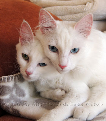 Lamia & Lancelot  35x40 cm
