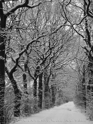 Verschneite Allee bei Schulte-Pellengahr - VU  60x80 cm