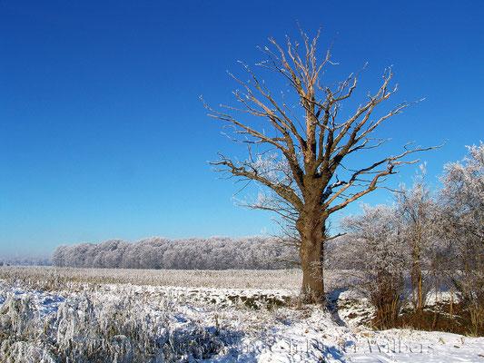Fast toter Baum bei Nottebrock 80x60 cm