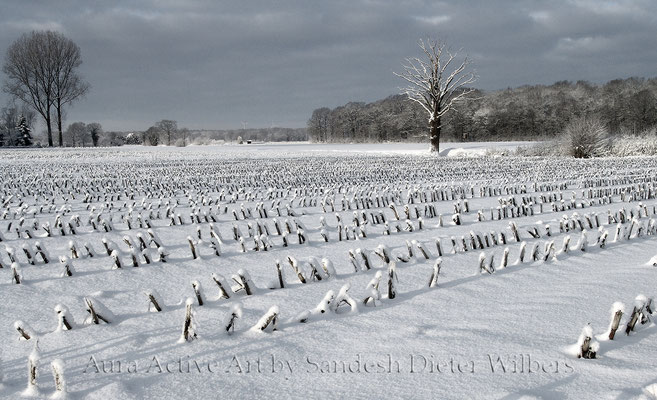 Maisstoppeln im Schnee - AFx  115x70 cm