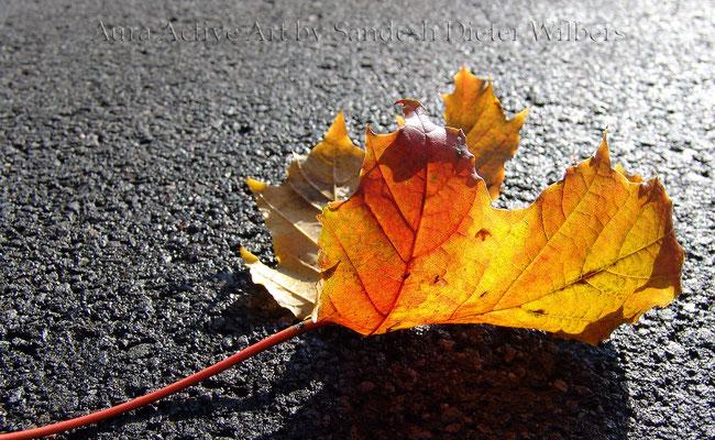 Herbstlicht 65x40 cm