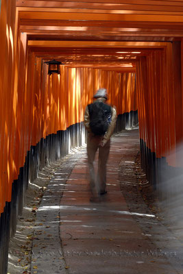 Prayer Walk in Fushimi Shrine - Kyoto  40x60 cm