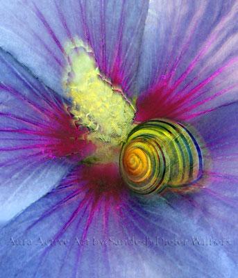 Schnecke in Blüte 2x  60x70 cm