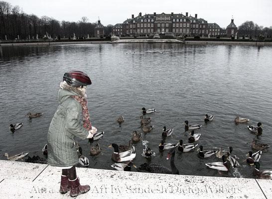 Enten füttern im Schlosspark Nordkirchen - vu  75x55 cm