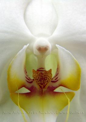 Alien Orchid 2b  45x60 cm