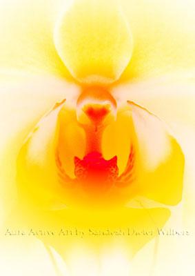 Orchid Alien 2xz  45x60 cm
