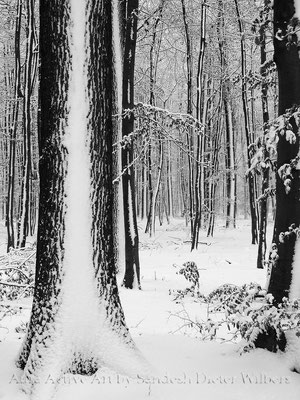 Schneesstreifen in der Davert bei der Teufelseiche - VU  60x80 cm