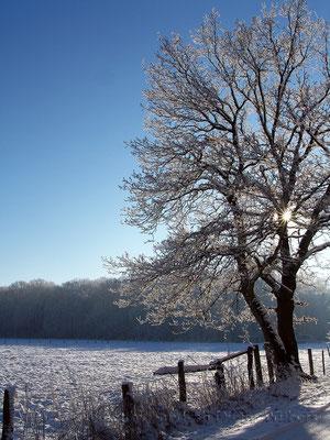 Winterimpression Davensberg 80x60 cm