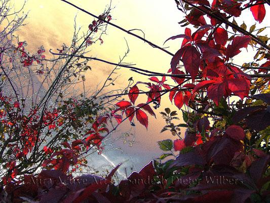 Herbstschatten  - 4 80x60 cm