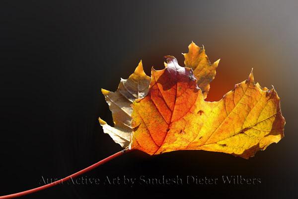 Herbstlicht  75x50 cm