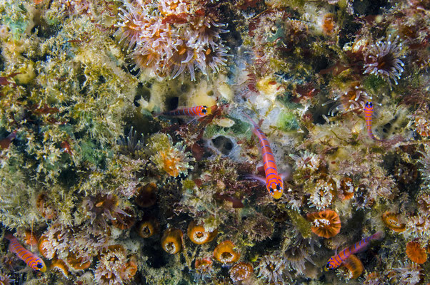 Galapagos Shark Diving - Korallenriff Galapagos Inseln