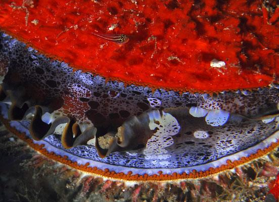 Unterwasserwelt von Raja Ampat, Indonesien ©Pindito