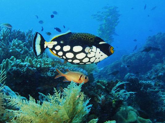 Unterwasserwelt von Raja Ampat, Indonesien ©Jonathan R. Green