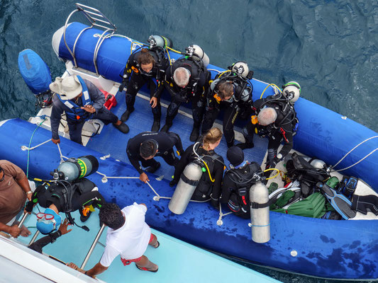 Divers in the panga / zodiac getting ready for diving alongside the ship