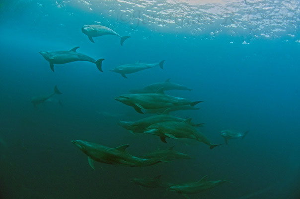 Galapagos Shark Diving - Dive with Dolphins at Galapagos Islands
