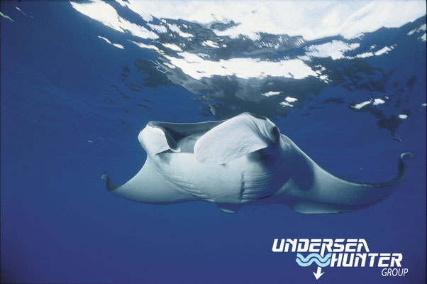 Underseahunter Group: Giant manta in Cocos Island