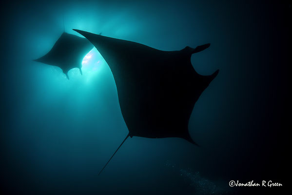Giant Mantas while diving in Cape Marshall in Galapagos, ©Galapagos Shark Diving
