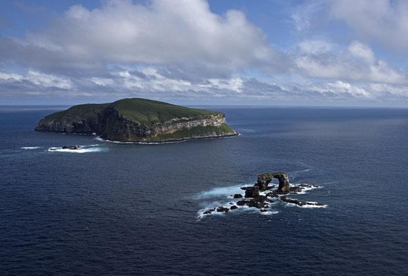 Galapagos Shark Diving - Darwins Arch Galapagos Inseln