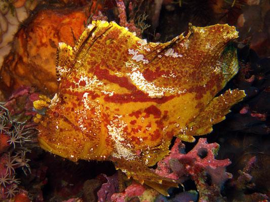 Unterwasserwelt in Raja Ampat, Indonesien ©Pindito