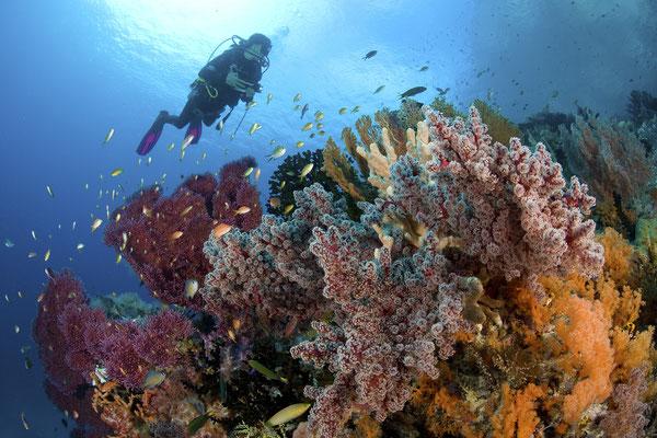 Coral reefs in Raja Ampat, Indonesia - ©Pindito