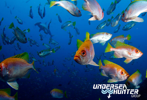 Underseahunter Group - school of fish in Cocos Island