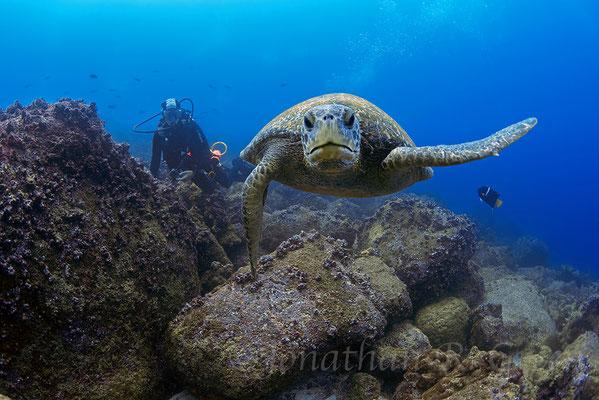 Galapagos Shark Diving - Tauchen mit Schildkröten Galapagos Inseln
